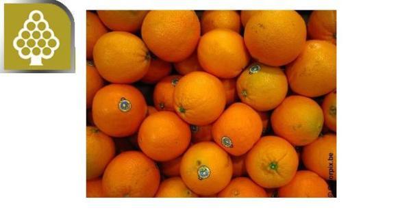Miguel Angel de Quevedo son unas 'che naranjas!!!