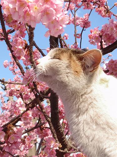Ah, huele a primavera!!!
