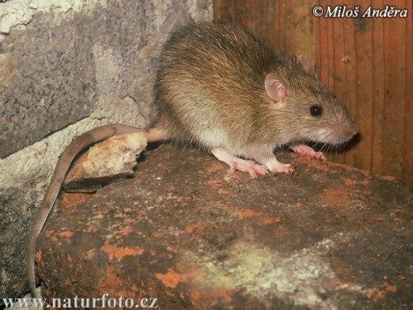 """""""Velez, te presento a Roberta, mi rata. Roberta, muerde al Velez"""""""
