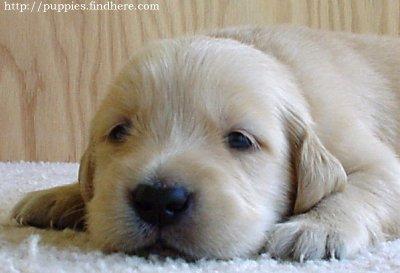 Tengo mucho sueño...